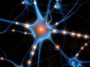 neurones-miroirs-empathie-coach-ados