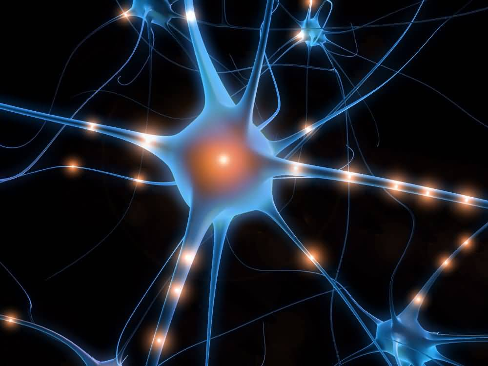 neurones-miroirs-empathie