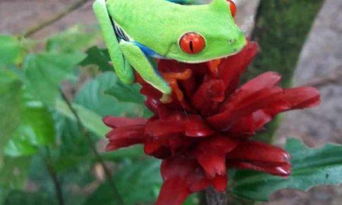 Histoire de la grenouille qui grimpe au sommet