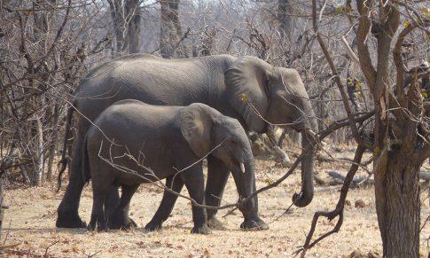Que nous apprend la légende des aveugles et de l'éléphant ?