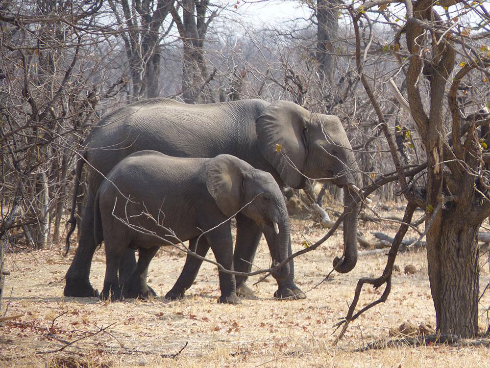 Conte-des-aveugles-et-de-l-elephant