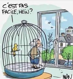 Conseils pour bien vivre le confinement avec son ado - Humour cage